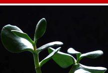 Si de plantas se trata!