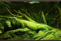 The Tropicarium Budapest - rainforest and aquarium