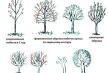 Как фориировать крону деревьям яблоневым