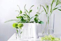 Plants & Flowers interior