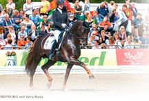 Events / Verden is an important meeting piont for breeding and auction. It is also a place, to combine breeding and sports. Hanoverian horse. Hannoveraner Breeding Sporthorses, Dressage Showjumping Verden Auction