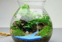 terrariumkarabük