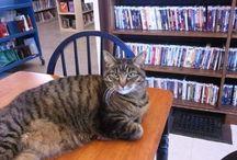 Zwierzęta w bibliotece