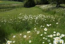 Kentish Countryside