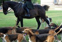 st Hubert and all / horsemanship