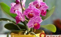 Léčba kvetinasadba