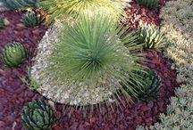 Vetplant tuintjies