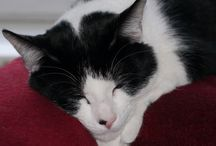 Pets / Lizzie (dog) & Phillip (Cat)
