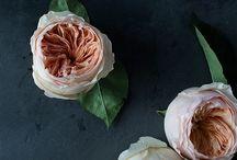 Favorite Blossoms / by Jumana Jacir