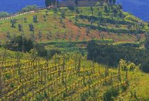 Italian Wine Tasting / Discover Italian wines, where to go and how to pair them.