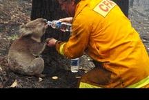good samaritans:everyday heroes