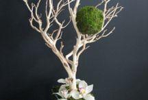 Interior Touches / Plants
