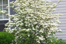 Bloemen mei-juni-juli-aug