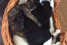 My cats. / Decor