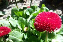 Natura / ekologiczny ogród kwiaty rośliny łąka