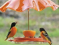 Gifts for a bird nerd / Anyone who knows me might call me a bird nerd. But my delight in bird watching has been contagious.  My six-year-old granddaughter is learning to love birds too / by Cindy Letchworth