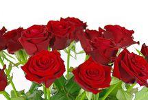 Kwiaciarnia / Kwiaciarnia Kwiat Lotosu : Kwiaty na każdą okazję, zajmujemy się wysyłką kwiatów w formie poczty kwiatowej na terenie Częstochowy i okolic. Dostawa 10 zł Częstochowa, 20 zł okolice! MAMY NAJNIŻSZE CENY!
