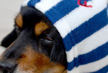 dog wear - bathrobe