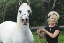 My beautiful horses ...