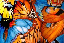 Butterflies and other Beautiful Insects