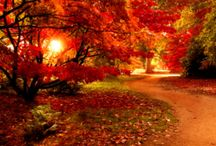 Pretty as a picture / Fire of autumn