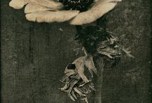 botanica- flowers & seed pods