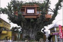 Tree Houses & Tiny Homes