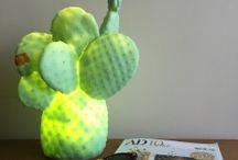 Cactusmanía