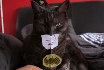 cats in costume / by modcatlove