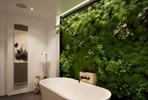 """Liveable Accessories / Breathe life into your space with the use of plants and """"pets."""""""