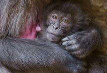 Mamães e bebês