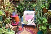 ev dekorasyon bitki duzenleme