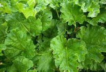 Agriculture, Crop, Food, Uncategorized
