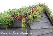 gardening / by Rachel Abraham