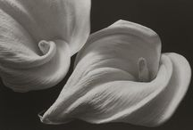 Art by Kenro Izu