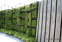 Gardens / Inspiring gardens and flora. I like functional, vertical and kitchen gardens