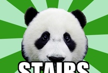 Dyspraxic panda memes
