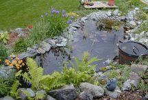 Zahradní jezirka