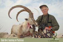 Sindh Ibex hunting in Pakistan