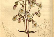 Flora / Botanik
