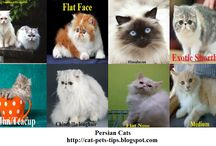 Pets / abaout pets such as cats, pets food, pets nutrition, pets care