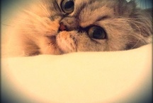 Chloe The Cat / All about my beautiful feline!