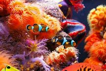 Pesci e mondo marino