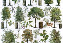 visual library : tree