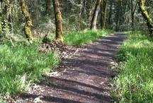 Favorite walks / It's wonderful having the opportunity to walk through the woods near Hendricks Park in Eugene Oregon.