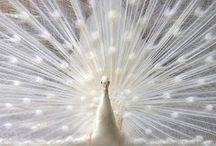 colors. white. / by Minttu L.