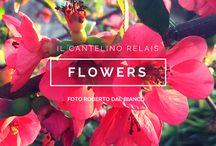 Flowers / fiori del nostro giardino