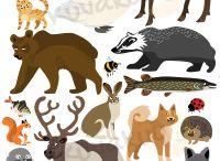 eläinkuvat