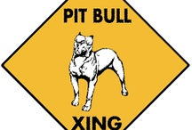 American Pit Bull Terrier Signs and Pictures / Warning and Caution American Pit Bull Terrier Signs. https://signswithanattitude.com/american-pit-bull-terrier-signs.html