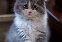 새끼 고양이